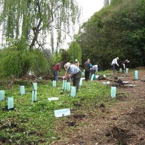 Planting trees at Bega River.