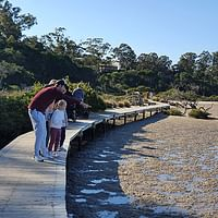 Merimbula Boardwalk Concept Design
