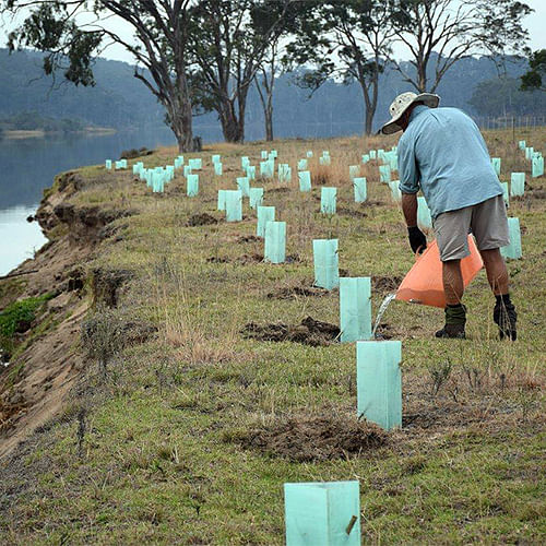A fencing and revegetation project is set transform the Bega River foreshore at the end of Thompsons Drive in Tathra.