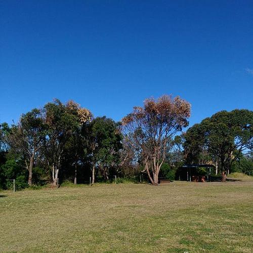 Vandalised trees at Ford Park Merimbula.