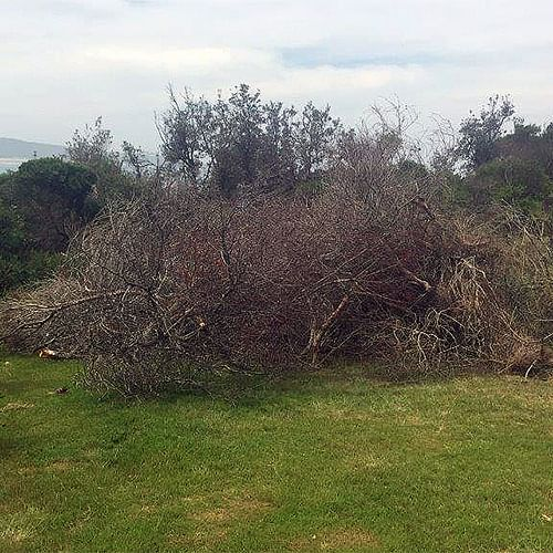 Stockpile of vegetative material piled up by the Tura community group