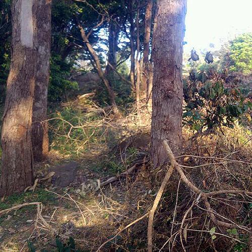 tree damage in bushland