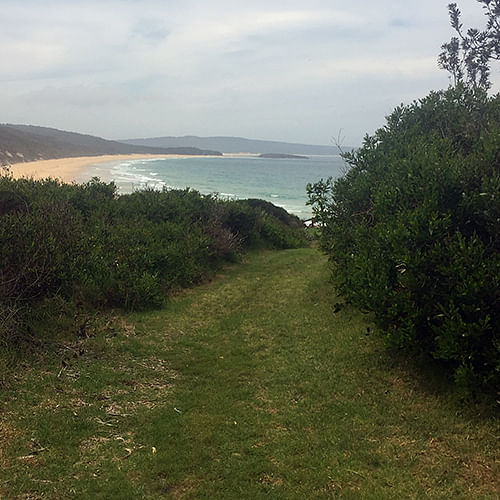 A site management plan for the Tura Head Coastal Reserve (The Point) and Dolphin Cove Reserve has been finalised.