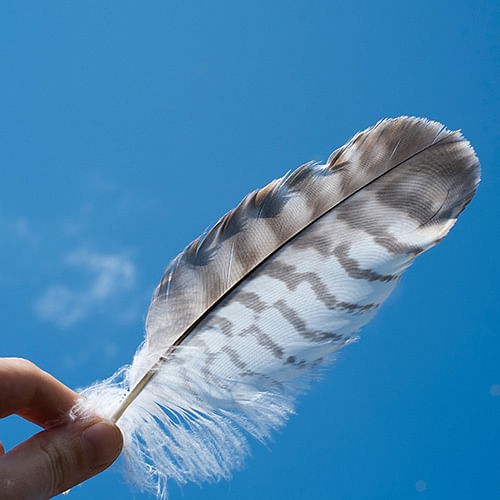 Our signs of wildlife project is asking people to donate what they find such as feathers