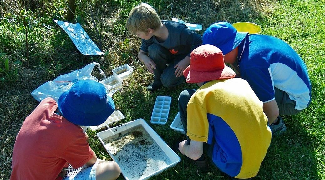 Pambula primary students pond-dip for water creatures at the Panboola Bioblitz organised by the Atlas of Life.