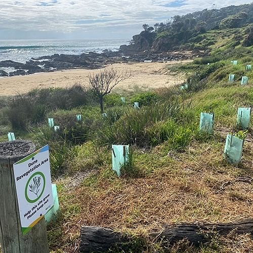 A project aimed at re-establishing and enhancing the coastal dune systems is well underway across the Shire.
