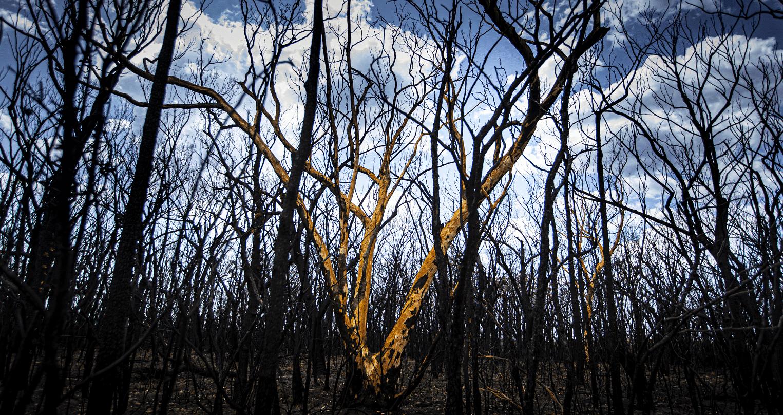 Burnt bushes.