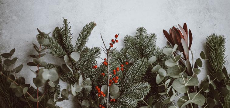 Christmas plants.