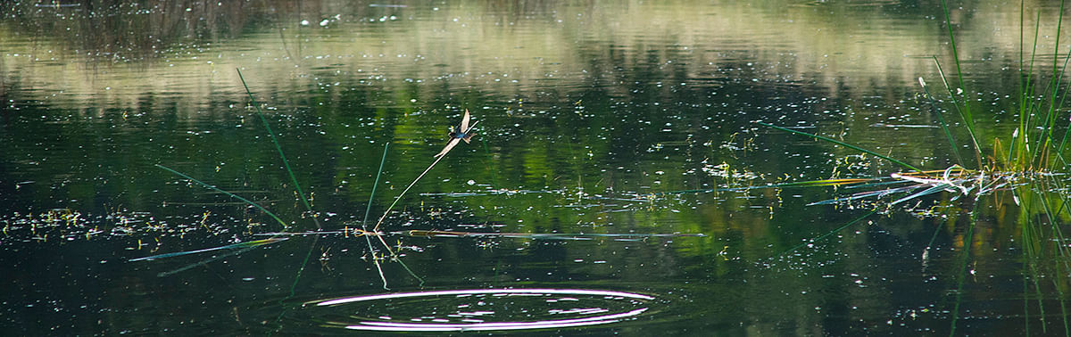 Image of pond.